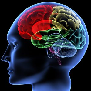 bigstock_brain_28191691
