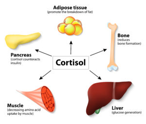 control your cortisol